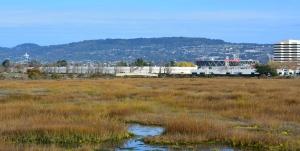 MLK Regional Shoreline Park wetland